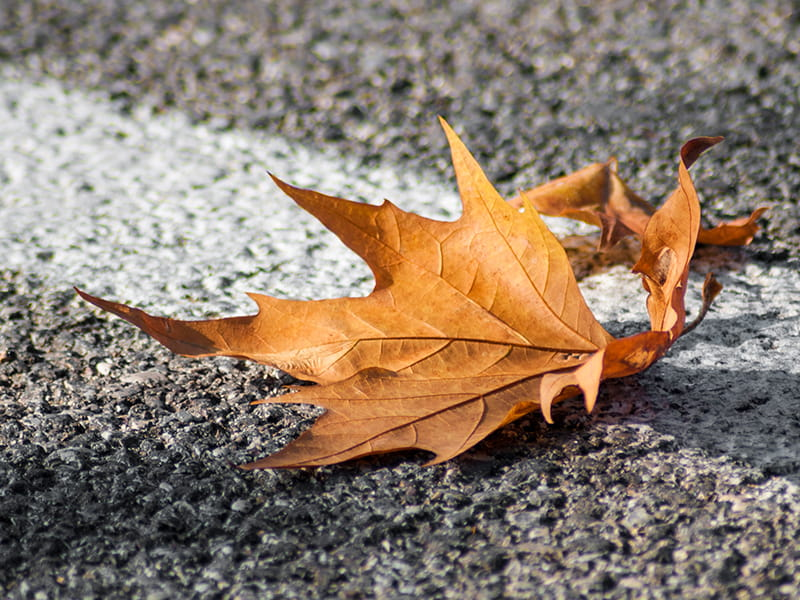 Leaf on the road